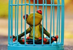 meditazione in carcere